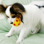 犬のアトピー原因と治療方法