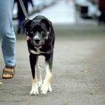 犬のアトピー性皮膚炎は免疫力で治る?