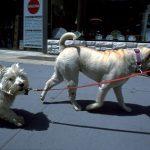 犬のアトピー性皮膚炎の治療薬と副作用
