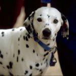 犬のアトピー性皮膚炎の治療費は?
